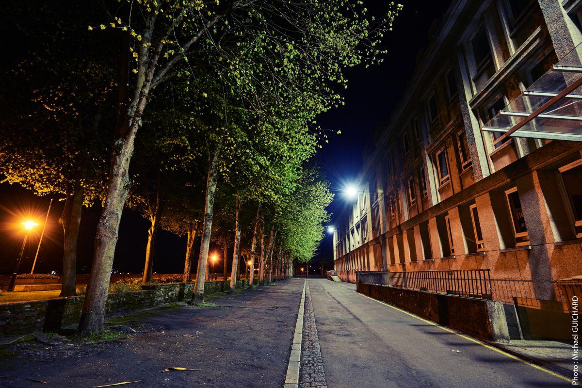 chemin nuit arbre ville