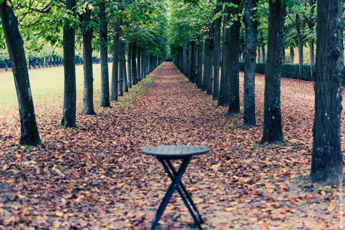 parc arbre foret
